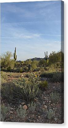 Desert Dream Canvas Print by Aimee L Maher Photography and Art Visit ALMGallerydotcom