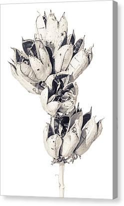 Desert Flower Canvas Print by Racheal Christian