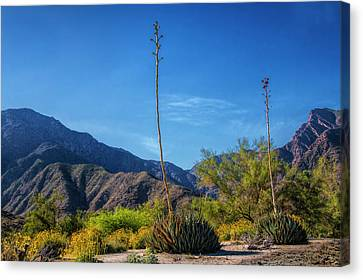 Canvas Print featuring the photograph Desert Flowers In The Anza-borrego Desert State Park by Randall Nyhof