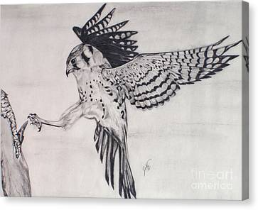 Canvas Print featuring the drawing Falcon I by Suzette Kallen