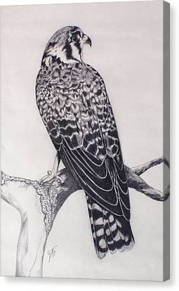 Canvas Print featuring the drawing Desert Hawk II by Suzette Kallen