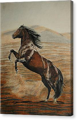 Canvas Print featuring the drawing Desert Horse by Melita Safran