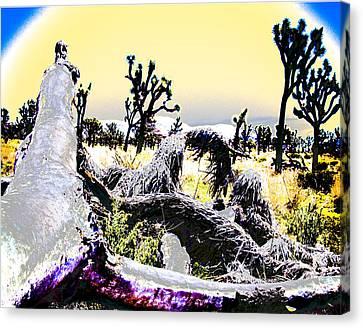 Desert Landscape - Joshua Tree National Monment Canvas Print by Ann Tracy