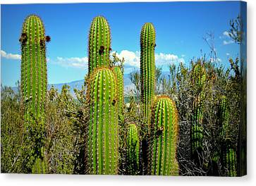 Canvas Print featuring the photograph Desert Plants - All In The Family by Glenn McCarthy