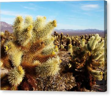 Canvas Print featuring the photograph Desert Plants - Porcupine Cholla by Glenn McCarthy