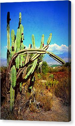 Canvas Print featuring the photograph Desert Plants - Westward Ho by Glenn McCarthy