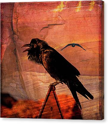 Canvas Print featuring the photograph Desert Raven by Mary Hone