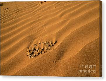 Desert Sand Dunes.  Canvas Print by Efraim Bar