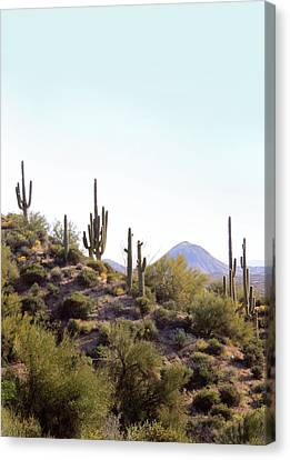 Canvas Print featuring the photograph Desert Skyline by Gordon Beck