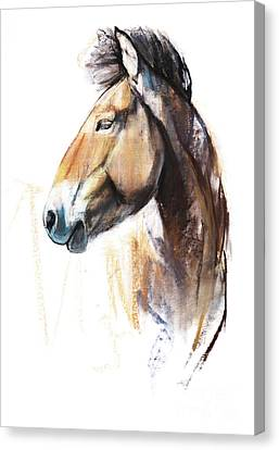 Desert Spirit Przewalski Canvas Print by Mark Adlington