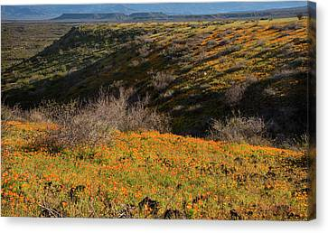 Canvas Print featuring the photograph Desert Spring Flowers by Dave Dilli