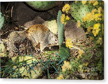 Desert Squirrel Canvas Print by Lawrence Burry