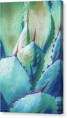 Desert Succulent Canvas Print by Julie Palencia