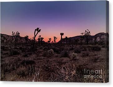 Desert Sunrise Joshua Tree National Park Canvas Print