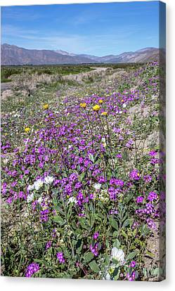 Canvas Print featuring the photograph Desert Super Bloom by Peter Tellone