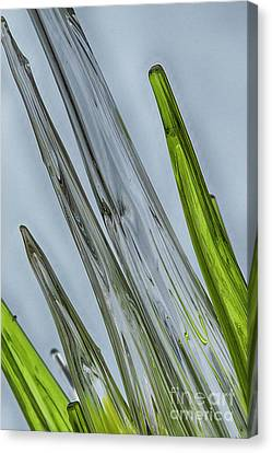 Glass Canvas Print by Anne Rodkin