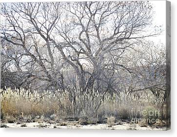 Canvas Print featuring the photograph Desert Tree Willows by Andrea Hazel Ihlefeld