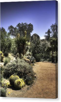Canvas Print featuring the photograph Desert Walkway by Lynn Geoffroy
