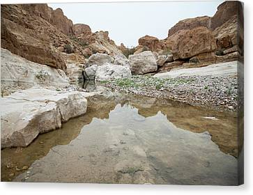 Desert Water Canvas Print
