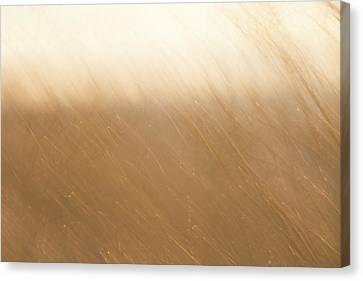Desert Wind 2 Canvas Print