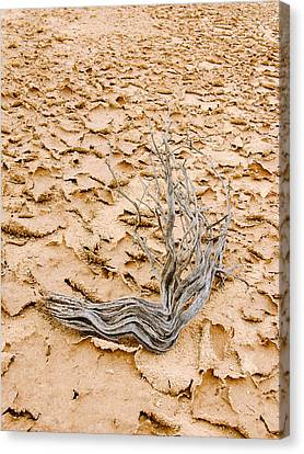 Desert Wood Canvas Print
