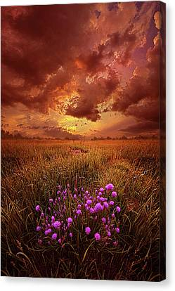 Desire Canvas Print by Phil Koch