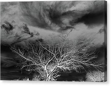 Desolate Feel Canvas Print