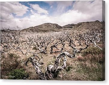 Desolation Canvas Print by Andrew Matwijec