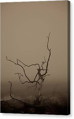 Desolation Canvas Print by Odd Jeppesen