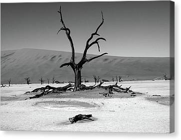 Namib Naukluft National Park  Canvas Print