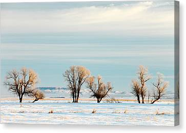 Desperate Trees Canvas Print