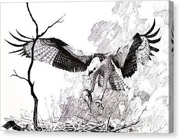 Osprey Canvas Print - Detail From Osprey by Paul Illian