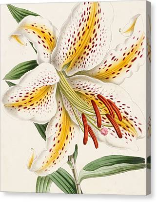 Detail Of A Lily Canvas Print by James Andrews