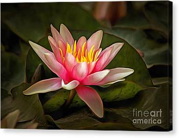 Detail Of The Waterlily Canvas Print