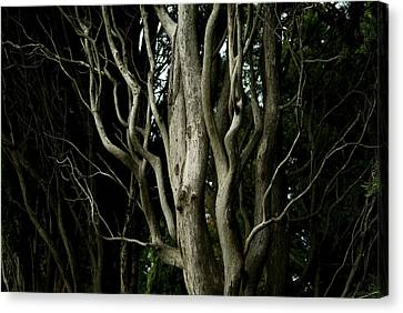Detailed View Of The Branches Of A Tree Canvas Print by Todd Gipstein