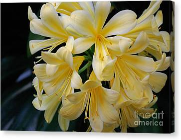 Details In Yellow And White Canvas Print by John S