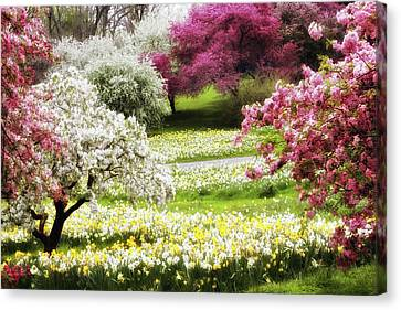 Divine Daffodils Canvas Print by Jessica Jenney