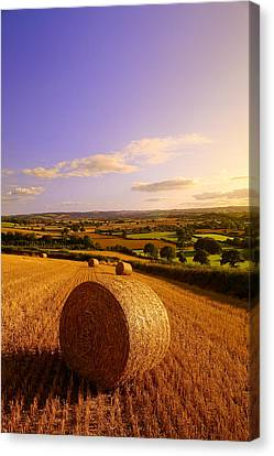 Harvest Canvas Print - Devon Haybales by Neil Buchan-Grant
