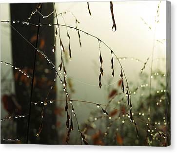 Dew Drop Garland Canvas Print