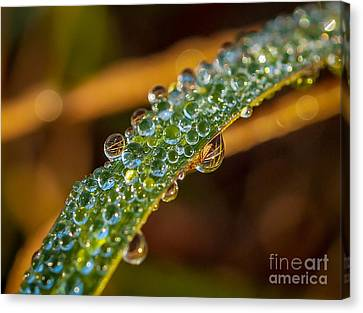 Dew Drop Reflection Canvas Print by Tom Claud