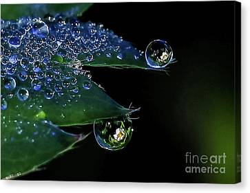 Dew Drop Strawberry Blossoms Reflections Canvas Print by Monica Hall