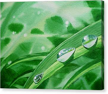 Dew Drops Canvas Print by Irina Sztukowski