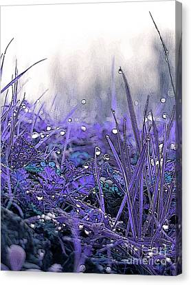 Dew Drops Magic Two Canvas Print by Robert Ball