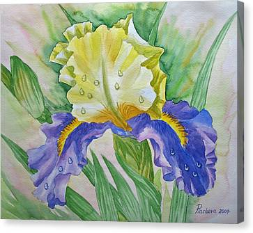 Dew Drops Upon Iris.2007 Canvas Print by Natalia Piacheva