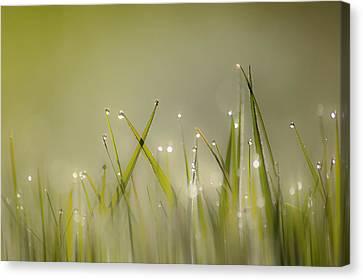 Dew On Grass Canvas Print