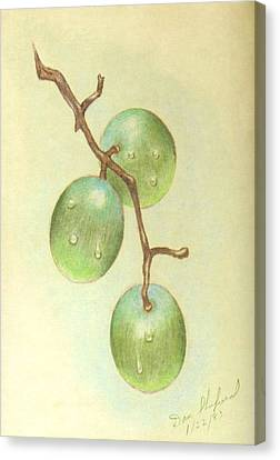 Dew On White Grapes Canvas Print by Daniel Shuford