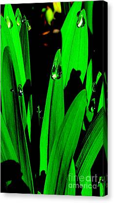 Dewdrops Canvas Print by Joyce Woodhouse