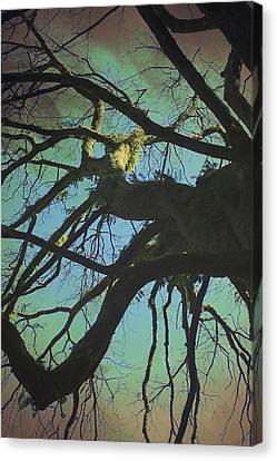 Canvas Print featuring the photograph Dialogue  by Connie Handscomb