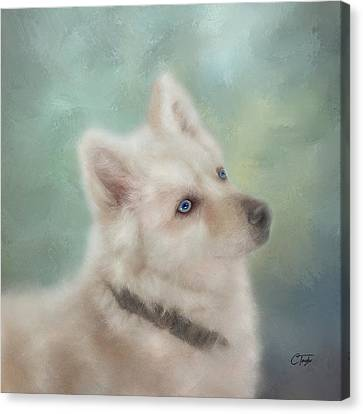 Diamond, The White Shepherd Canvas Print by Colleen Taylor