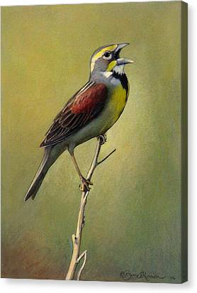 Dickcissel Summer Song Canvas Print by Bruce Morrison